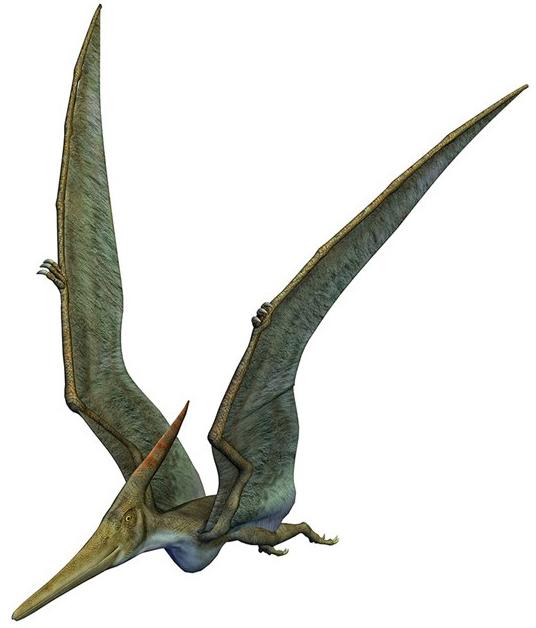Informazioni pterosauri e pterodattili i dinosauri volanti for Nomi di rettili