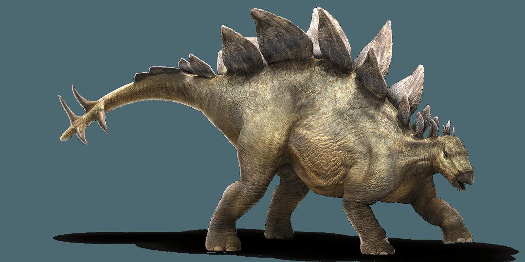 Informazioni stegosauro il dinosauro con la cresta - Immagini di dinosauro da colorare in ...