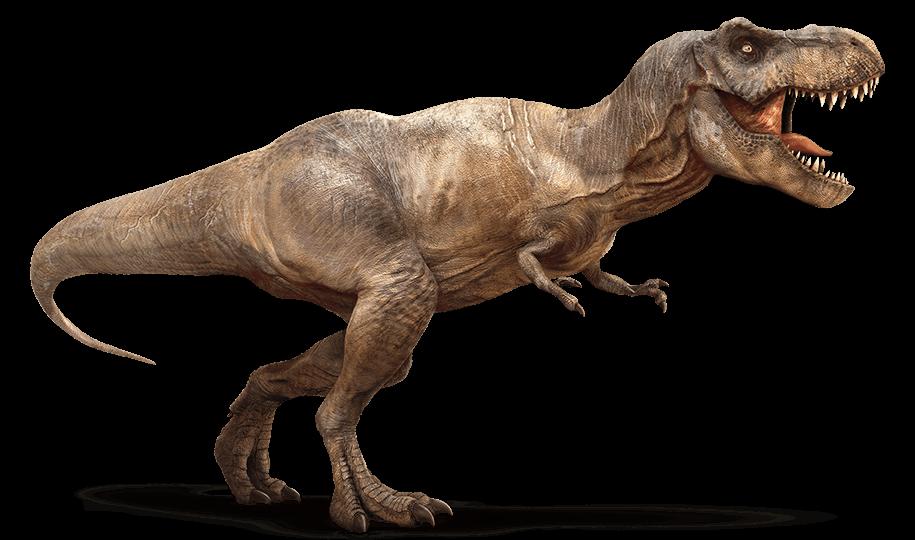 Informazioni Tirannosauro T Rex